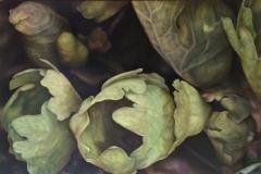 Bloodroot 4 2015 oil on wood panel 20 x 30