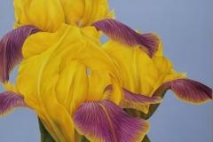 yellow iris 2018 36 x 36 wood panel